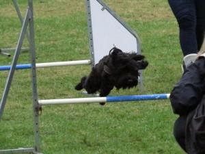 Carlos elsker at dyrke hundsport